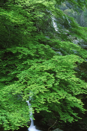 Fresh green and waterfall 写真素材