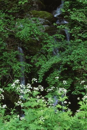 小さな滝 写真素材 - 76395164