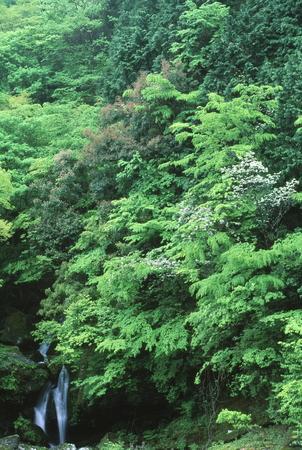 新緑の滝 写真素材 - 76395167