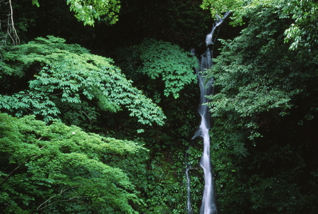 Waterfall among green