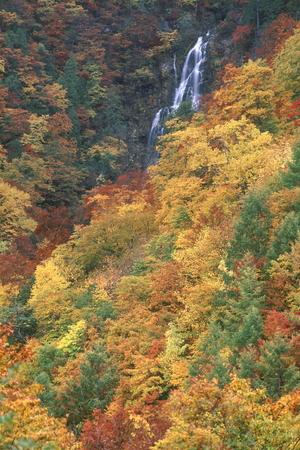 紅葉の Amoutakataki