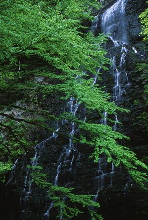 新鮮な緑と Ryuusougataki 写真素材 - 76396327
