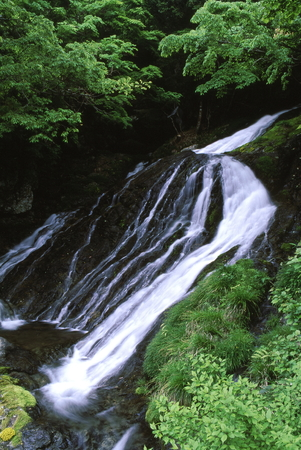 Fresh green and waterfall 写真素材