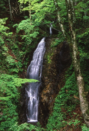 Waterfall of fresh green 写真素材