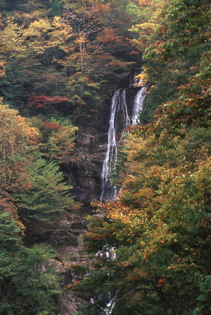 Waterfall of colored leaves 写真素材