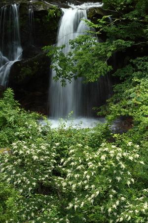 滝 写真素材 - 76396367
