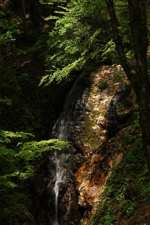 新緑の滝 写真素材