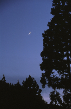 夕暮れの月 写真素材 - 76396360