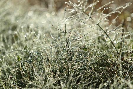 Morning dew 写真素材 - 76404589