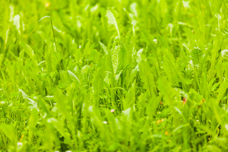 view of a greeen meadow in the spring Stock Photo