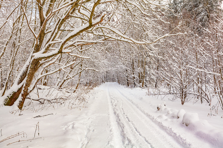 schneeberg: view of winter forest (landscape) Stock Photo