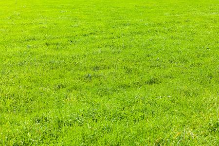 view of a grass field  Reklamní fotografie