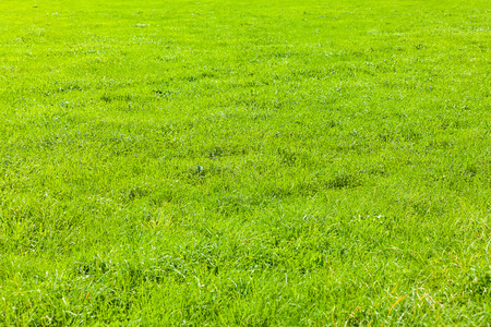 grassy plot: view of a grass field  Stock Photo