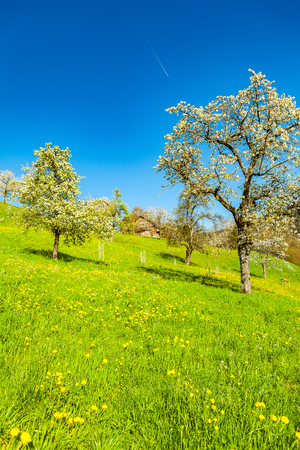 view of amazing meadow in the springtime Stock Photo
