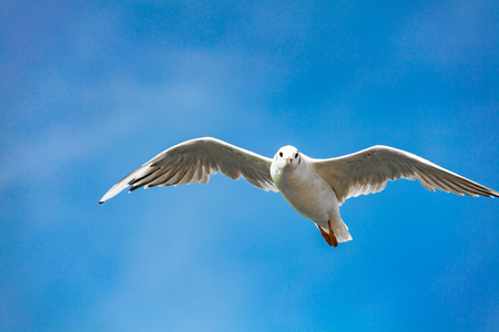 wingspan: view of a seagull on the sea
