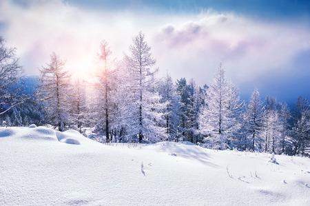 風景: 雪は、夕暮れ時、山で木を覆われました。美しい冬の風景。冬の森。創造的な調色の効果