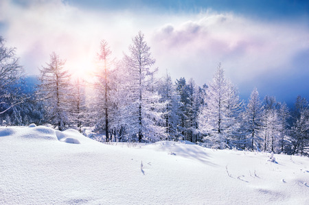 Snow covered trees in the mountains at sunset. Beautiful winter landscape. Winter forest. Creative toning effect 스톡 콘텐츠