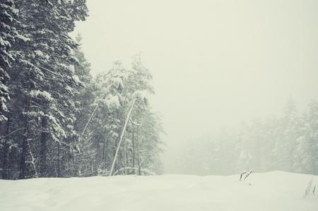 冬の森の雪。美しい冬の風景。創造的なビンテージ フィルター、レトロな効果 写真素材
