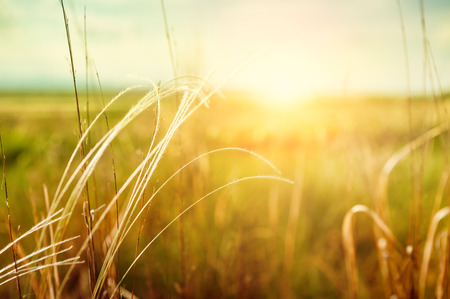 Piękny krajobraz lato z trawy na polu o zachodzie słońca. Latem tła. Mała głębia ostrości