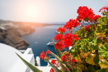 sharpness: Red geranium flowers. Santorini island, Greece.  Beautiful landscape with sea view. Small depth of sharpness Stock Photo