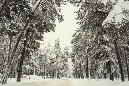 Road in a winter forest after snowfall. Beautiful winter landscape Reklamní fotografie