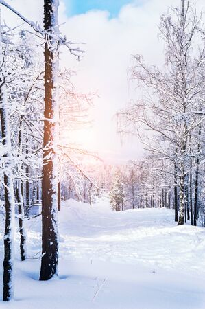 winter sky: Snow covered trees in the mountains at sunset. Beautiful winter landscape. Winter forest Stock Photo