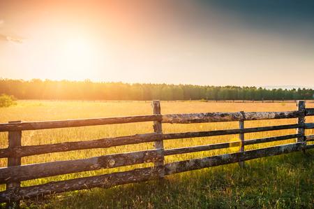 Landelijke natuur bij zonsondergang. Mooie zomer landschap met veld en bos