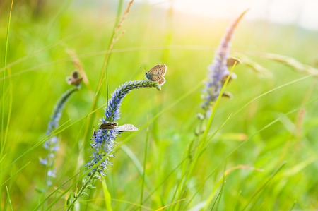 feld: Green grass in the meadow and butterflies. Beautiful summer landscape. Soft focus Stock Photo