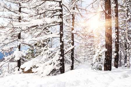 Snow covered trees in the mountains at sunset. Beautiful winter landscape. Winter forest. Standard-Bild