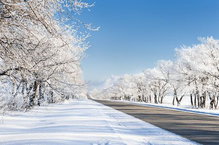 snow and trees: Beautiful winter landscape with road and snow-covered trees
