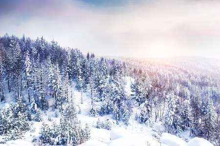 Snow covered trees in the mountains at sunset. Beautiful winter landscape. Winter forest Zdjęcie Seryjne