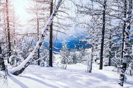 Snow covered trees in the mountains at sunset. Beautiful winter landscape. Winter forest. Creative toning effect Standard-Bild