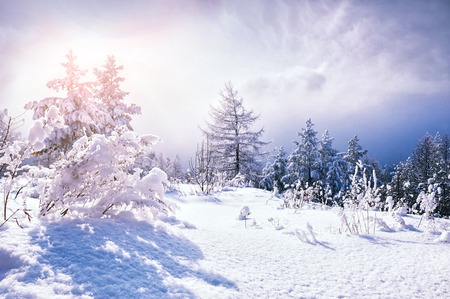Snow covered trees in the mountains at sunset. Beautiful winter landscape. Winter forest. Creative toning effect 免版税图像