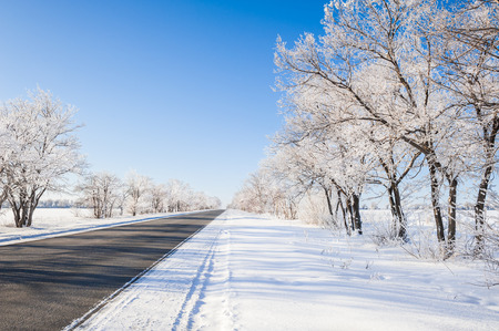 winter sky: Snow covered trees on a clear frosty day. Winter road. Beautiful winter landscape.