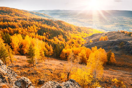 fall landscape: Beautiful view of autumn forest in the mountains. Fall scene. Autumn colorful landscape. Sunset in the mountains.