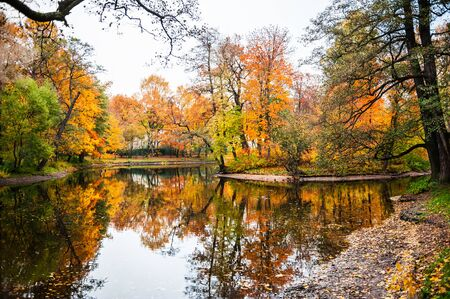 fall landscape: Autumn landscape. Fall scene. Beautiful yellow trees on the shore of the pond in the park Stock Photo