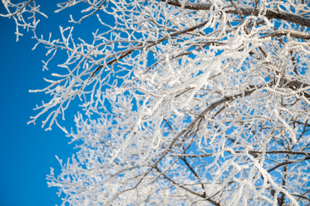 sharpness: Winter landscape with trees in the frost. First snow. Small depth of sharpness Stock Photo