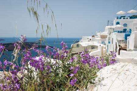 sharpness: Flowers on the street of the white city. Santorini island, Greece. Small depth of sharpness