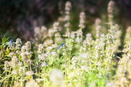 Small blue dragonfly on the green grass in the field. Macro image with small depth of field