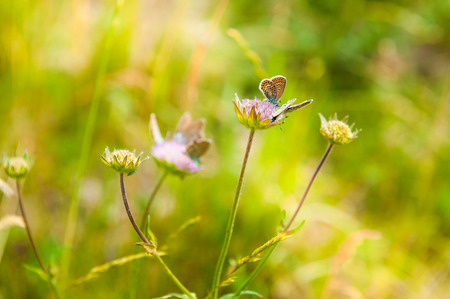 feld: Green grass in the meadow and butterflies. Beautiful summer landscape. Small depth of sharpness Stock Photo