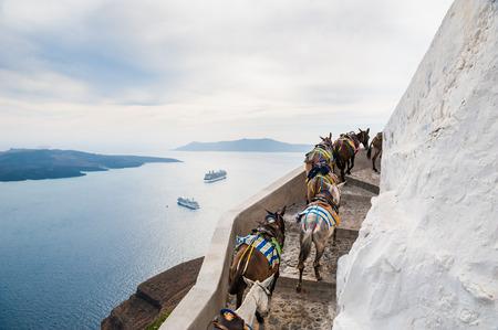 burro: Caballos y burros caminando en el camino a lo largo del mar. Hermoso paisaje con vista al mar. La isla de Santorini, Grecia.