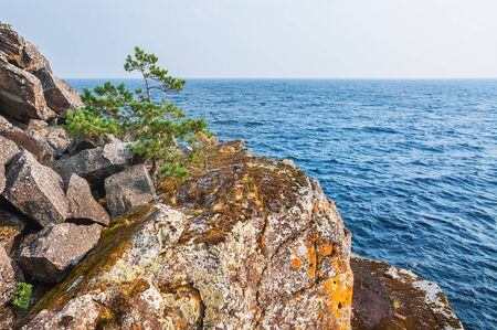 lone pine: Lone pine tree on a cliff by the sea. Beautiful summer landscape.