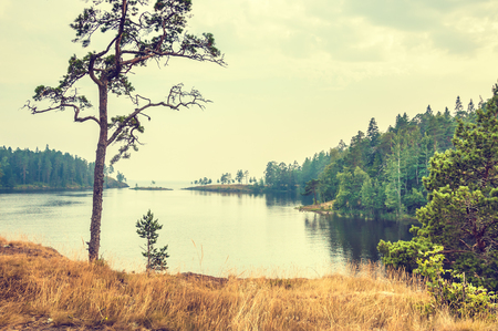 Pines on the coast of lake. Beautiful summer landscape. Creative vintage filter, retro effect