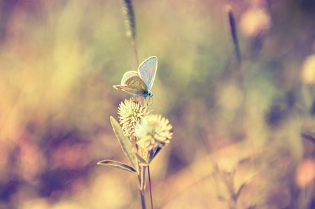 feld: Macro image of butterfly. Small depth of field. Vintage effect. Beautiful summer background.