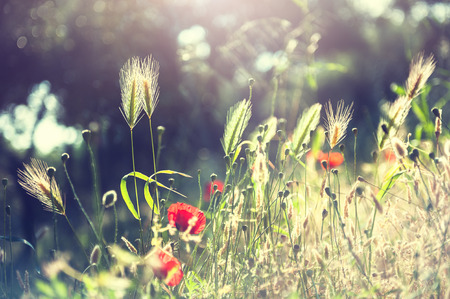 Forest meadow with wild flowers and herbs. Selective focus. Beautiful summer landscape, vintage filter