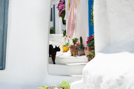 cycladic: Black cat on the stairs of the house. Selective focus. Beautiful cycladic architecture in the ancient district of Plaka, Athens, Greece. Stock Photo
