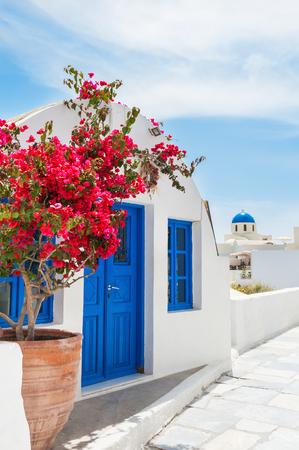 Błękitno-biała architektura na wyspie Santorini, Grecja. Piękni kwiatów drzewa na ulicie w Oia miasteczku