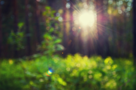 Blurred forest background with green grass and sunbeams through the trees Stock Photo