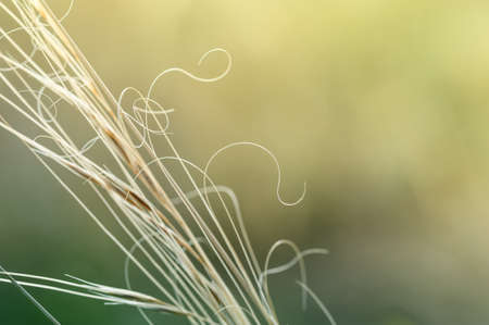 macro image: Macro image of wild grasses, small depth of field.