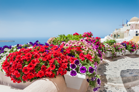Multicolored flowers on the street. Santorini island, Greece. Beautiful landscape with sea view. Selective focus Stock Photo